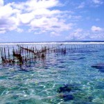 Fish trap - Taha'a
