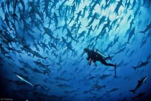Festival de l'Image Sous-marine de Polynésie