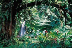 Jardin de Vaipahi - © H.Leue