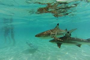 Rencontre avec les raies et requins