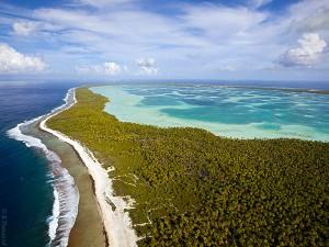 Cocoteraie sur un atoll des Tuamotu