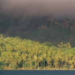 Coconut trees - Bora Bora